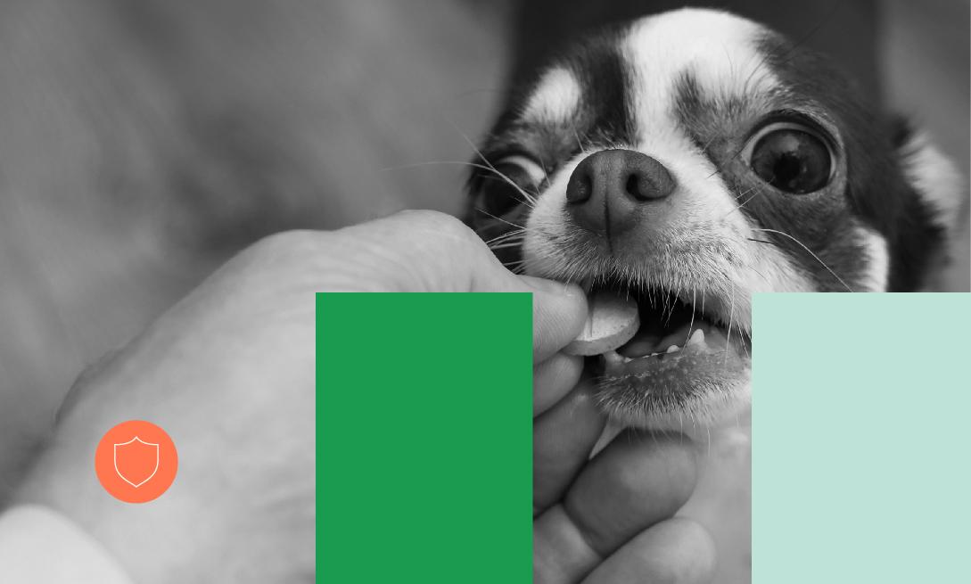 Novos Cursos_Farmacologia e terapêutica veterinária
