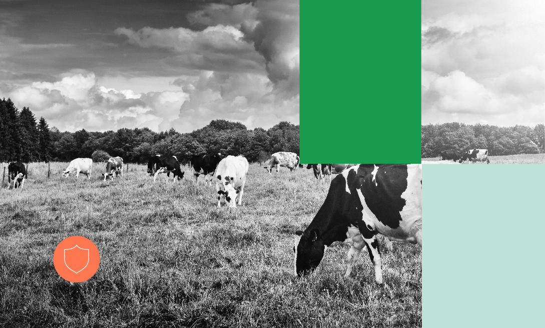 Novos Cursos_Produção e reprodução de bovinos