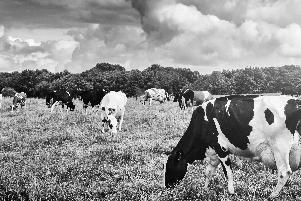 Novos Cursos_Produção e reprodução de bovinos-1