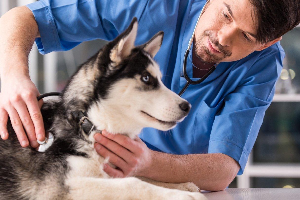 ebook-UTP-POS-acupuntura-energetica-veterinaria-e-terapias-orientais-01